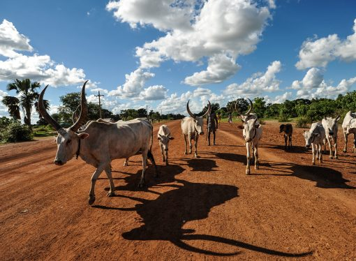 South Sudan's battle for cattle is forcing schoolgirls to become teenage brides